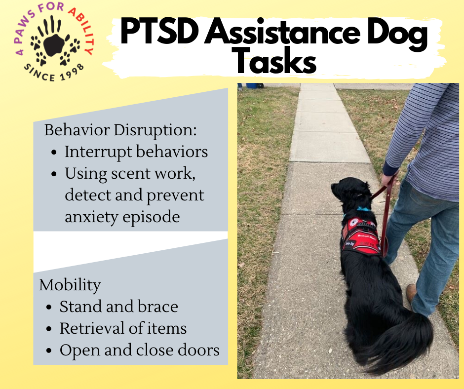 Behavior Disruption: Interrupt behaviors. Using scent work. detect and prevent anxiety episode.  Mobility: Stand and Brace, retrieval of items, open and close doors.