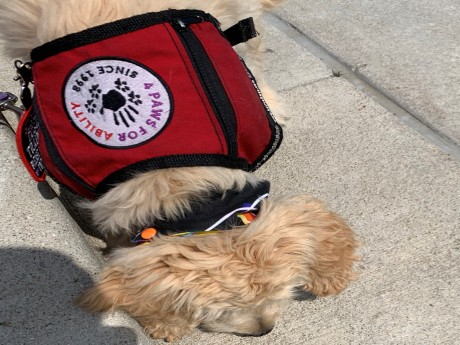 National PTSD Awareness Month: How a Service Dog Makes a Difference
